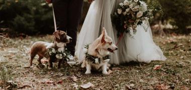 Reni&Ati erdei esküvője Budakeszin